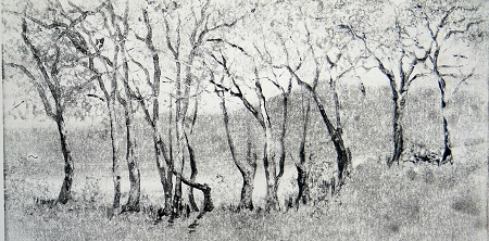 rLakeside trees -Coniston.Monoprint.25x54cm.£425