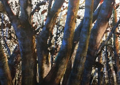 Glorious Beech.Watercolour25x45cm Frame 50x67cm.£895